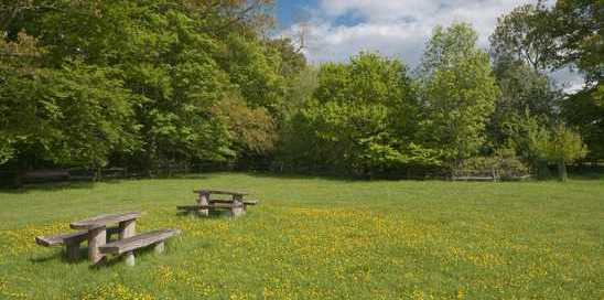 photodune-4856790-picnic-table-in-blooming-meadow-xs